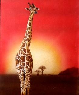 Giraffa al tramonto